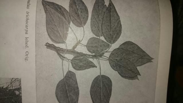 herbal sloimming lehed maksimaalne kaalulangus on vastuolus