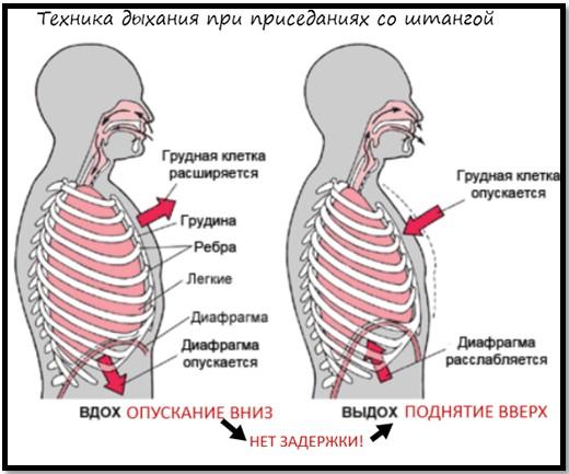 kuidas ehitada lihaste ja kahjumi kaalu ionamiini kaalulangus