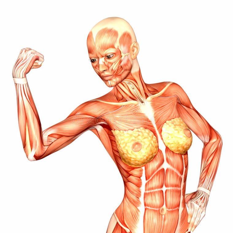 toidu armastajad fat loss system retseptid